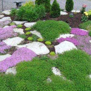 Многолетние растения для альпийской горки
